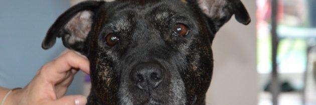 Jak pozbyć się nieprzyjemnego zapachu psa z domu?