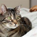 Jak usunąć zapach kociego moczu?